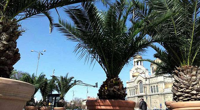 Пальмы вернулись!