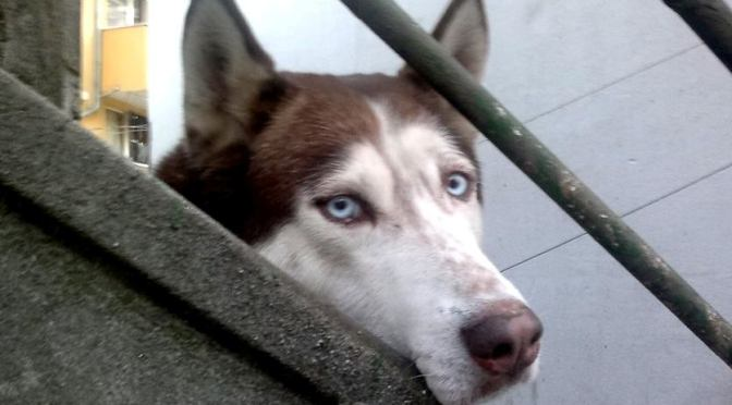 «Усынови собаку- найди верного друга». Акция 30.08