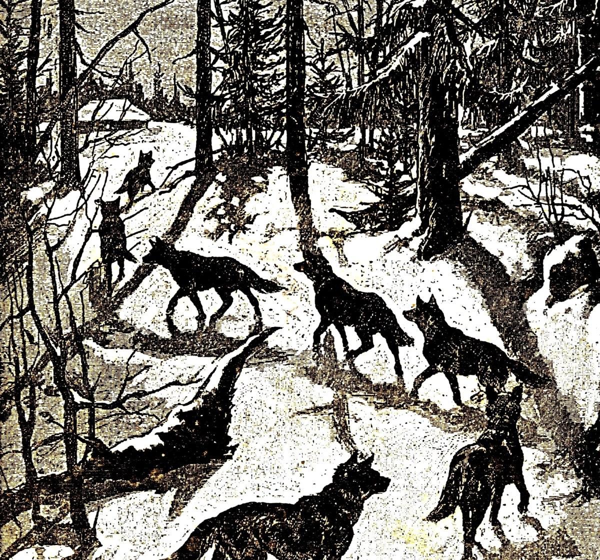 Мратенцы, они же Волчьи дни