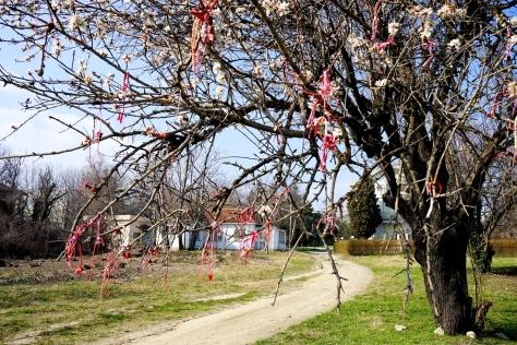 Варненские деревья расцветают весной, не только собственными цветами, но и красно-белыми мартиничками.