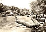 Река Камчия. 1960 г.