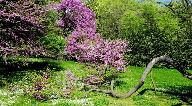 Весна в Варне. Как это было.